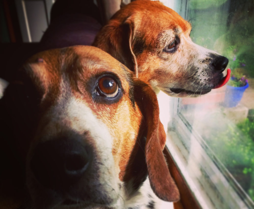 Feargal and Fergus at the Window
